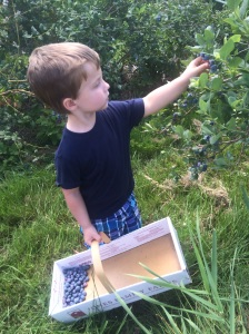 Picking blueberries! www.foreverfitmom.net