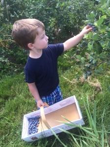 Picking blueberries! www.foreverfitmom.net